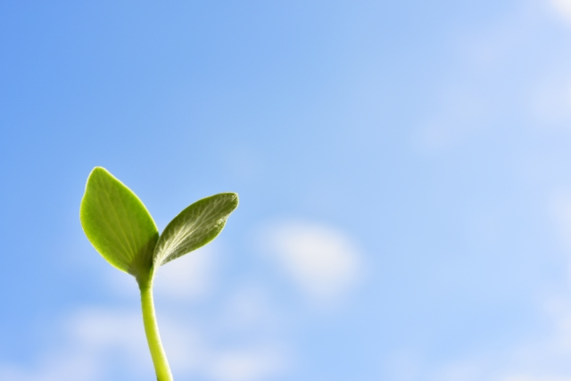 BIG TREE株式会社がご提案する積立投資