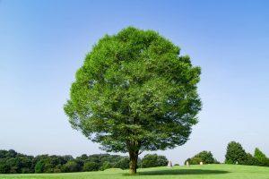 BIG TREE株式会社のイメージ大樹は成長・豊かさ・安心安定の象徴です。
