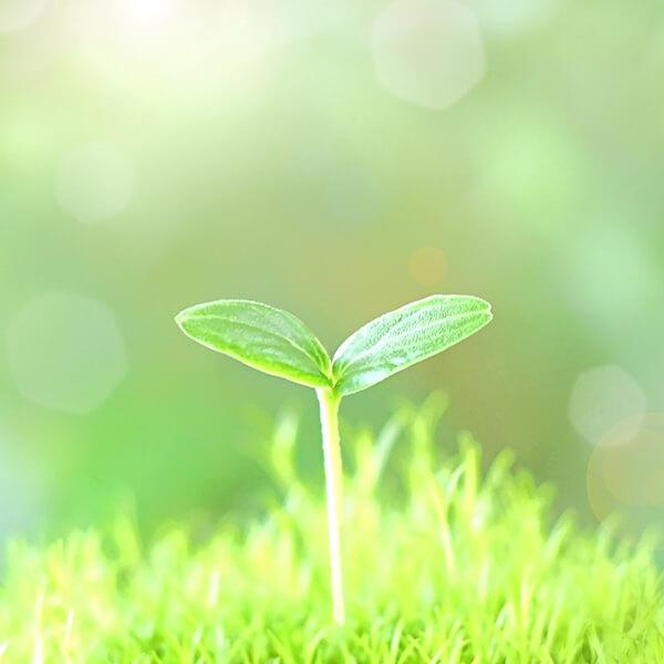 BIG TREE株式会社の人材採用:スタートアップ